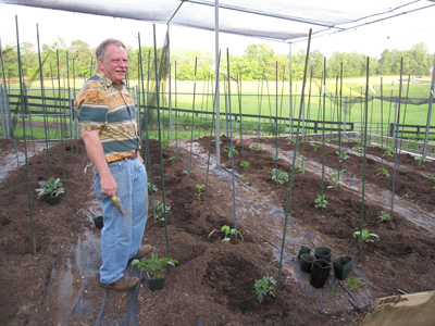 Don with young dahlia plants